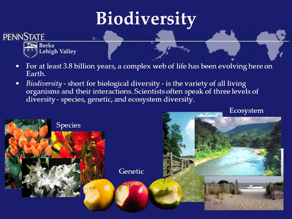 Importance of Biodiversity Reasons human cultures value biodiversity: The rich variety of species in biological communities gives us food, wood, fibers, energy, raw materials, industrial chemicals, and medicines, all of which pour hundreds of millions of dollars into the world economy each year.