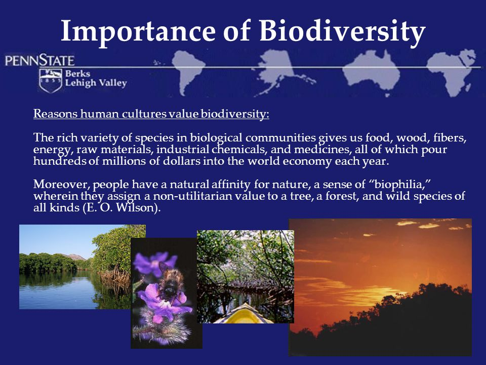 Importance of Biodiversity Pollination For every third bite you take, you can thank a pollinator.