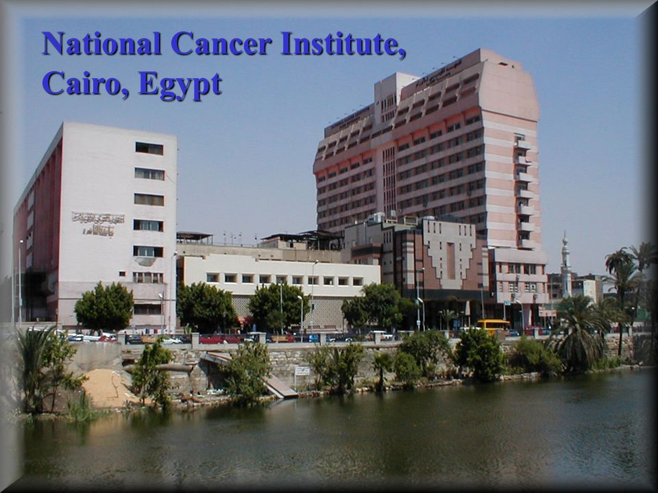 National Cancer Institute, Cairo, Egypt