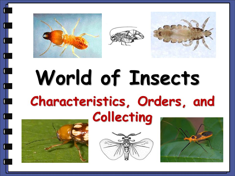 World of Insects Characteristics, Orders, and Collecting