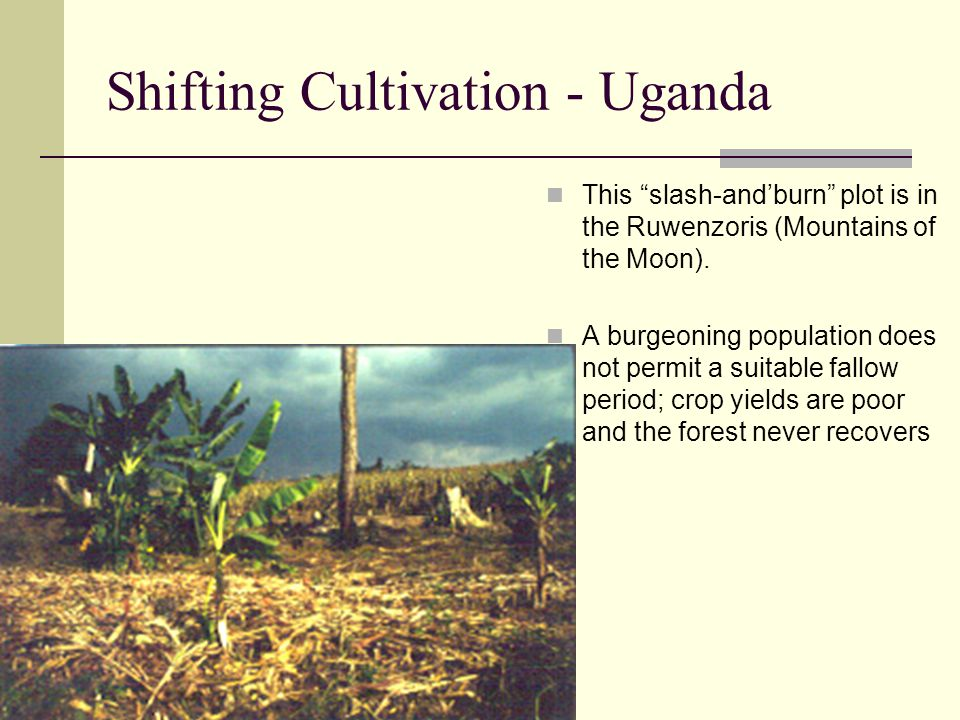 """Shifting Cultivation - Uganda This """"slash-and'burn"""" plot is in the Ruwenzoris (Mountains of the Moon). A burgeoning population does not permit a suita"""