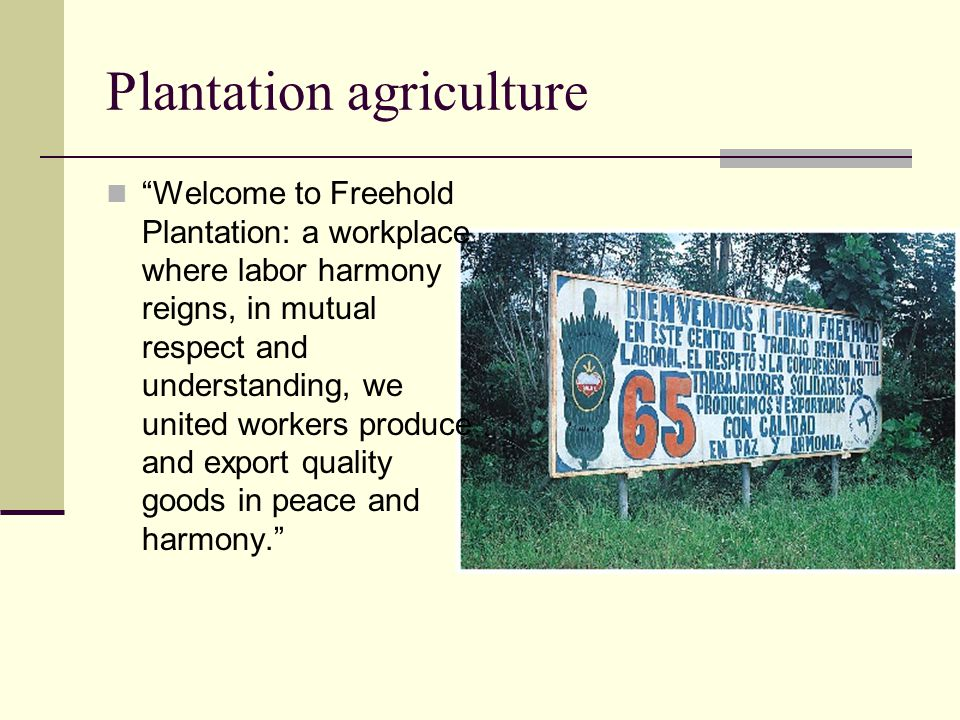 """Plantation agriculture """"Welcome to Freehold Plantation: a workplace where labor harmony reigns, in mutual respect and understanding, we united workers"""