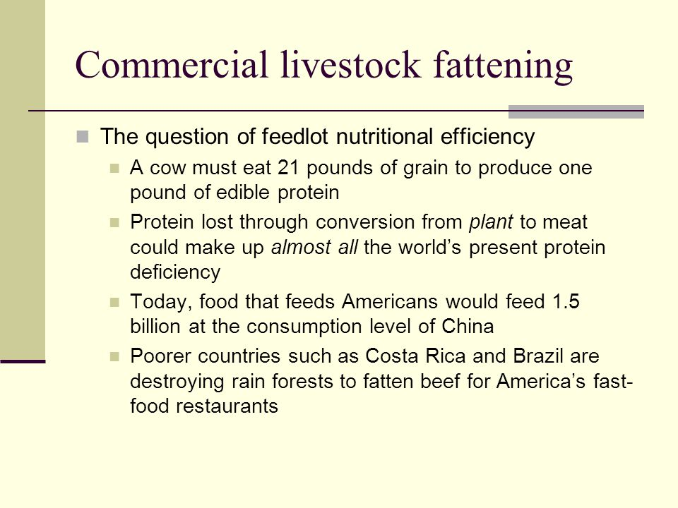 Commercial livestock fattening The question of feedlot nutritional efficiency A cow must eat 21 pounds of grain to produce one pound of edible protein