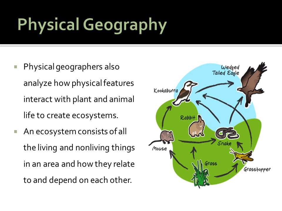  Physical geographers also analyze how physical features interact with plant and animal life to create ecosystems.  An ecosystem consists of all the