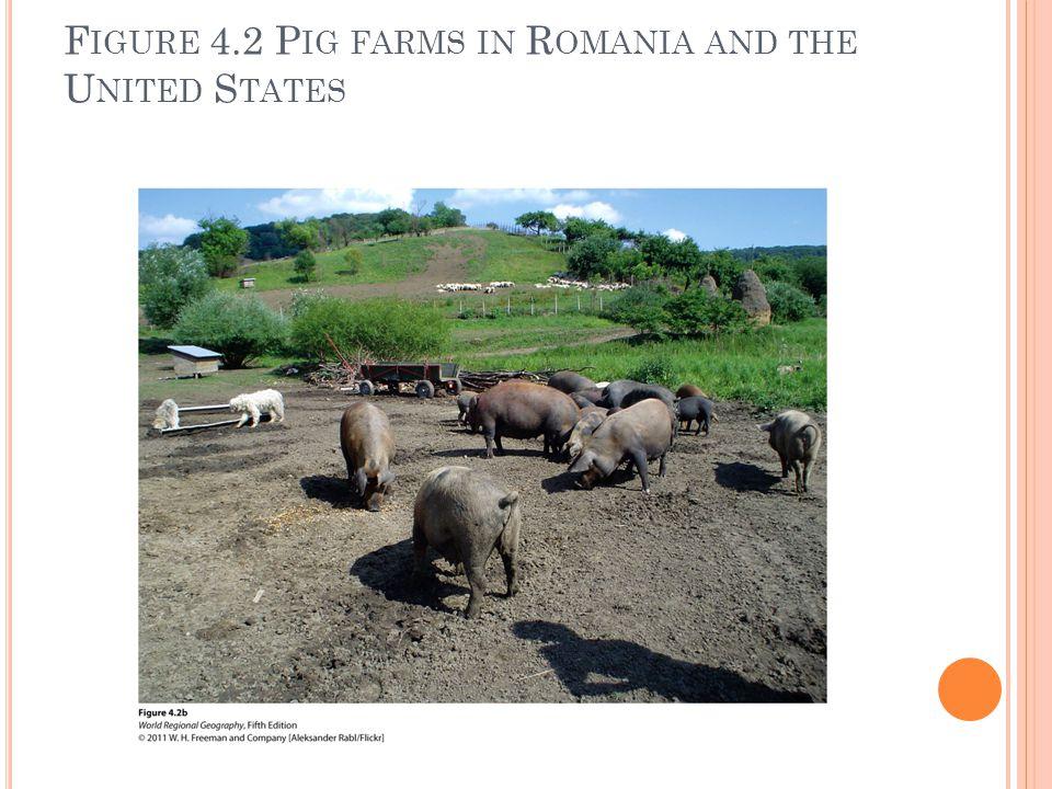 F IGURE 4.2 P IG FARMS IN R OMANIA AND THE U NITED S TATES