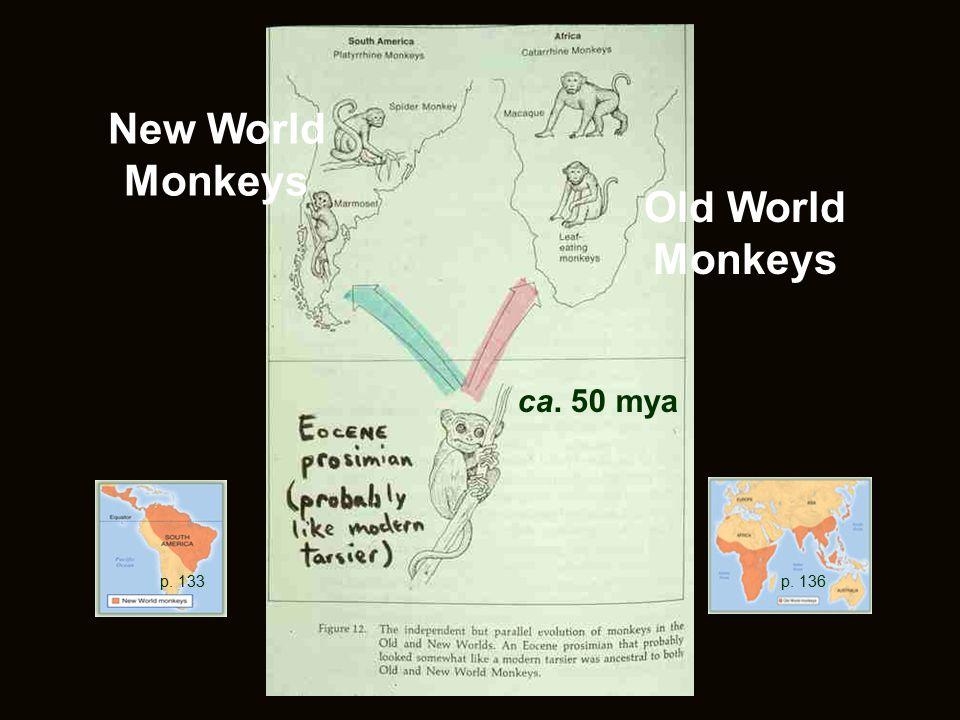 New World Monkeys Old World Monkeys ca. 50 mya p. 133 p. 136