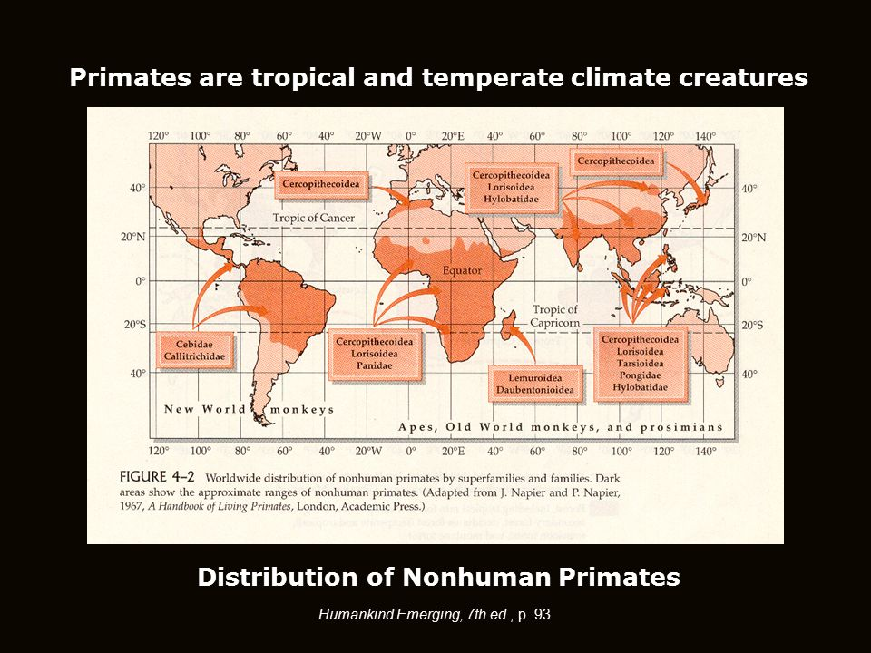 Humankind Emerging, 7th ed., p. 93 Distribution of Nonhuman Primates Primates are tropical and temperate climate creatures