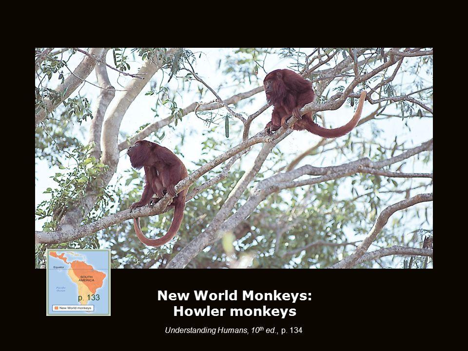 New World Monkeys: Howler monkeys p. 133 Understanding Humans, 10 th ed., p. 134 p. 133
