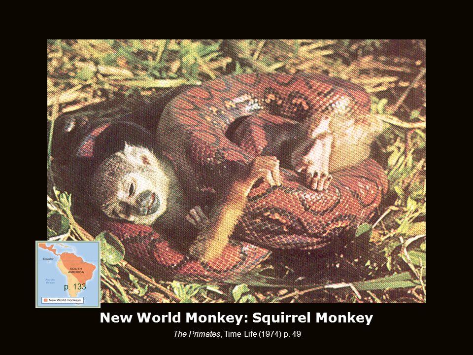 New World Monkey: Squirrel Monkey The Primates, Time-Life (1974) p. 49 p. 133