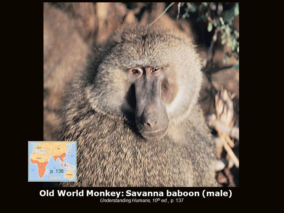Old World Monkey: Savanna baboon (male) Understanding Humans, 10 th ed., p. 137 p. 136