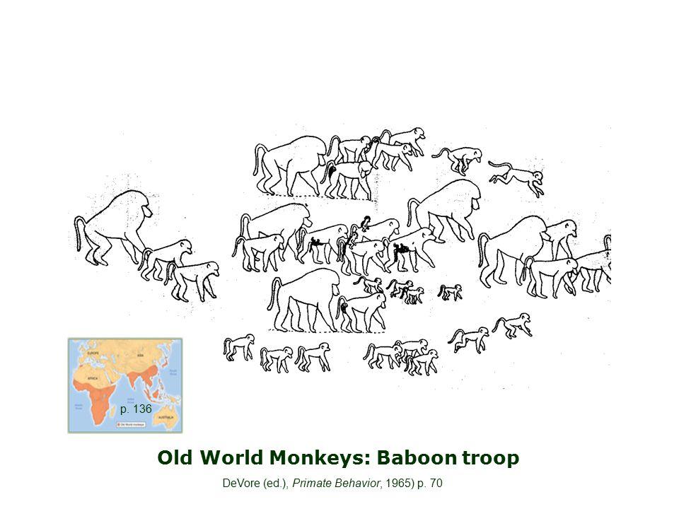 Old World Monkeys: Baboon troop DeVore (ed.), Primate Behavior, 1965) p. 70 p. 136