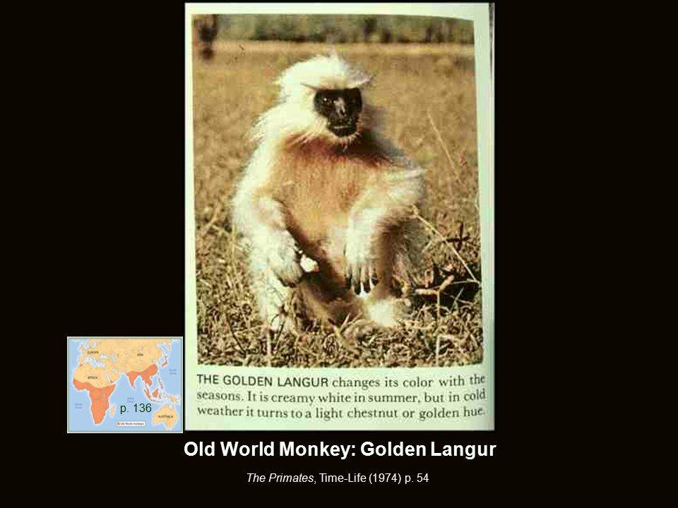 The Primates, Time-Life (1974) p. 54 p. 136 Old World Monkey: Golden Langur