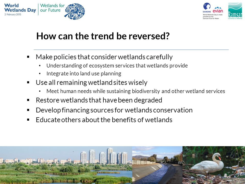 How can the trend be reversed?  Make policies that consider wetlands carefully Understanding of ecosystem services that wetlands provide Integrate in