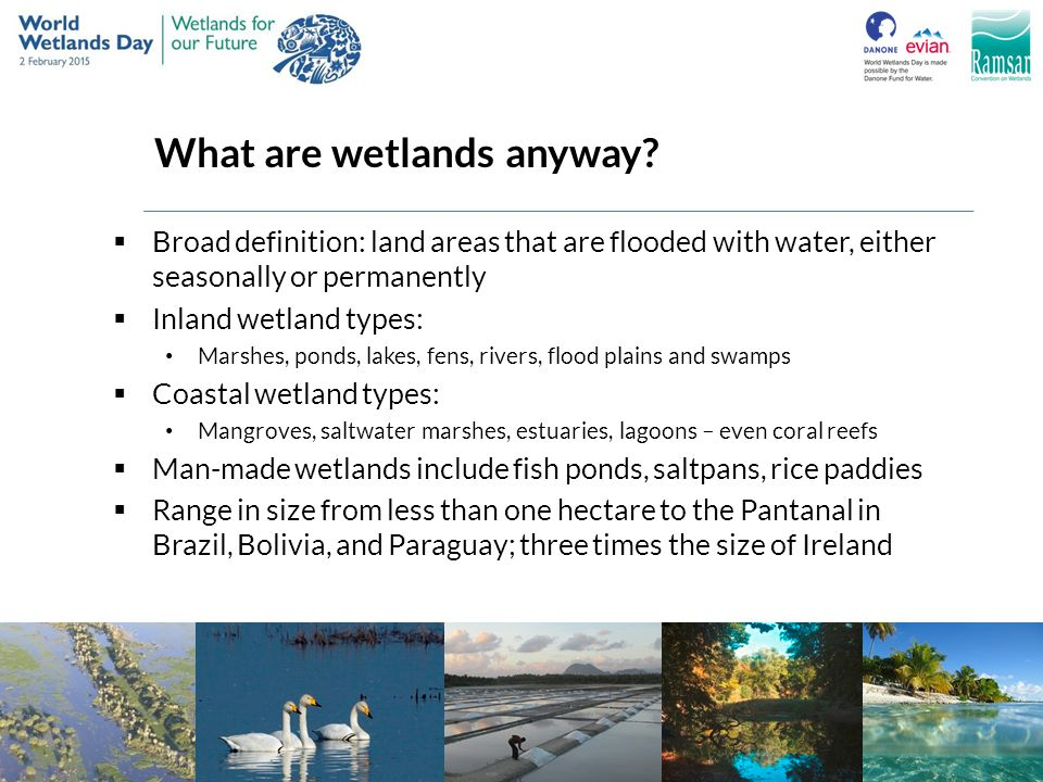 What are wetlands anyway?  Broad definition: land areas that are flooded with water, either seasonally or permanently  Inland wetland types: Marshes