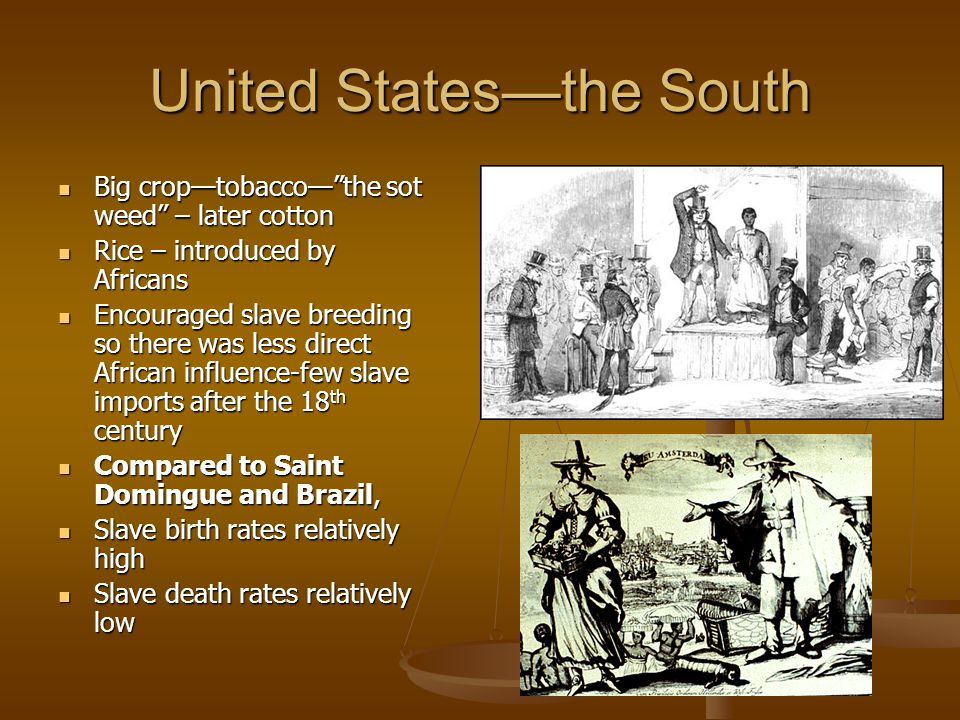 United States—the South Big crop—tobacco— the sot weed – later cotton Big crop—tobacco— the sot weed – later cotton Rice – introduced by Africans Rice – introduced by Africans Encouraged slave breeding so there was less direct African influence-few slave imports after the 18 th century Encouraged slave breeding so there was less direct African influence-few slave imports after the 18 th century Compared to Saint Domingue and Brazil, Compared to Saint Domingue and Brazil, Slave birth rates relatively high Slave birth rates relatively high Slave death rates relatively low Slave death rates relatively low