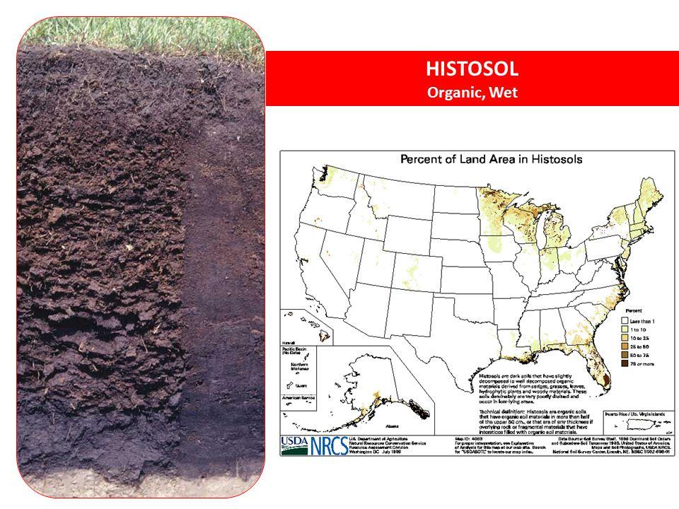 HISTOSOL Organic, Wet