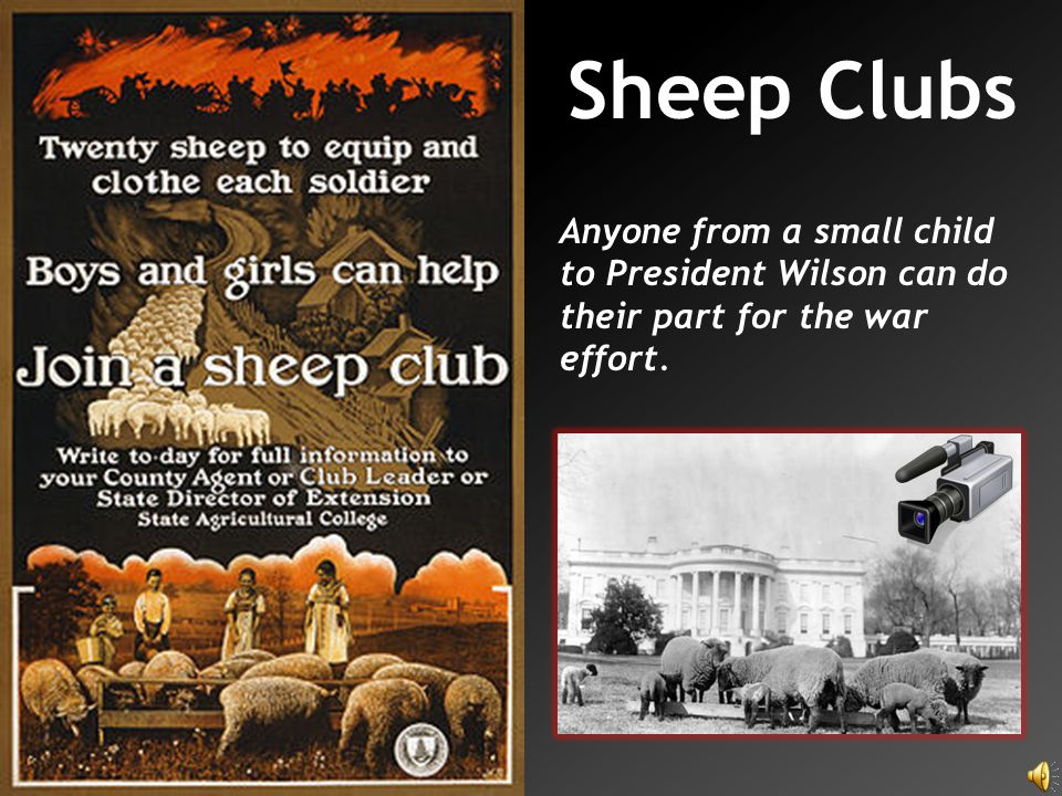 Sheep Clubs Anyone from a small child to President Wilson can do their part for the war effort.