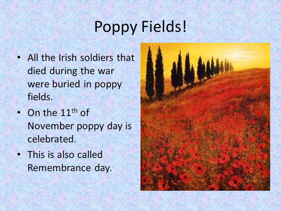 Poppy Fields. All the Irish soldiers that died during the war were buried in poppy fields.