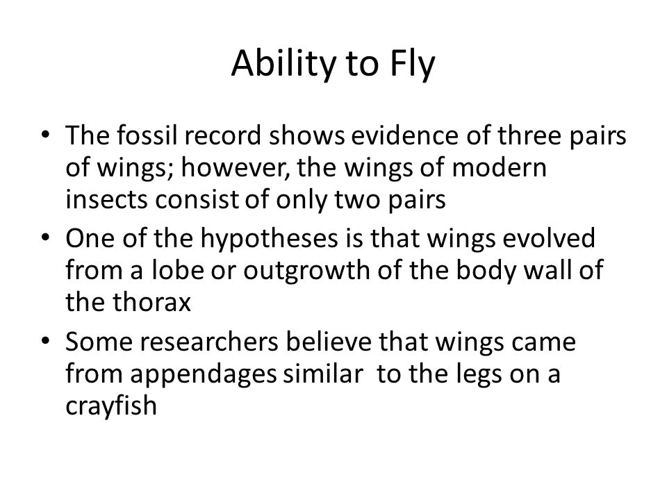 Ability to Fly The fossil record shows evidence of three pairs of wings; however, the wings of modern insects consist of only two pairs One of the hypotheses is that wings evolved from a lobe or outgrowth of the body wall of the thorax Some researchers believe that wings came from appendages similar to the legs on a crayfish