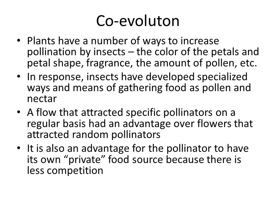 Co-evoluton Plants have a number of ways to increase pollination by insects – the color of the petals and petal shape, fragrance, the amount of pollen, etc.