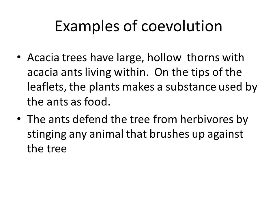 Examples of coevolution Acacia trees have large, hollow thorns with acacia ants living within.