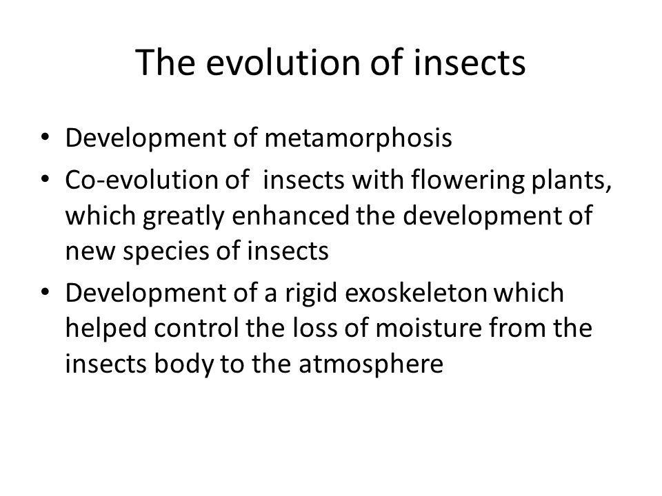 The evolution of insects Development of metamorphosis Co-evolution of insects with flowering plants, which greatly enhanced the development of new species of insects Development of a rigid exoskeleton which helped control the loss of moisture from the insects body to the atmosphere