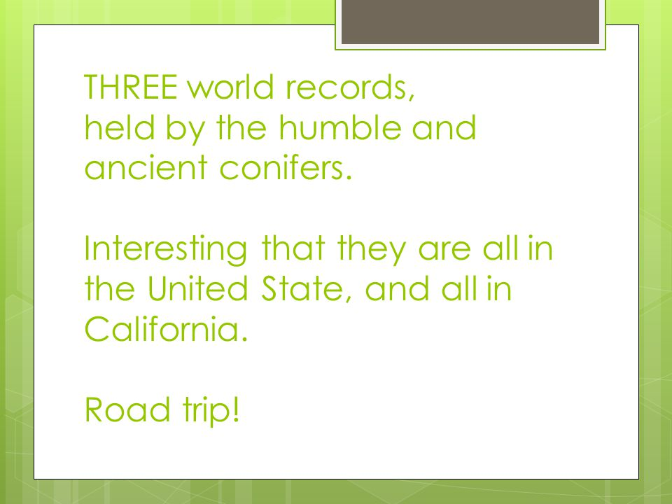 THREE world records, held by the humble and ancient conifers.