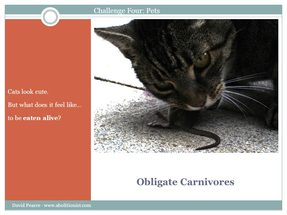Obligate Carnivores Cats look cute. But what does it feel like… to be eaten alive? David Pearce - www.abolitionist.com Challenge Four: Pets