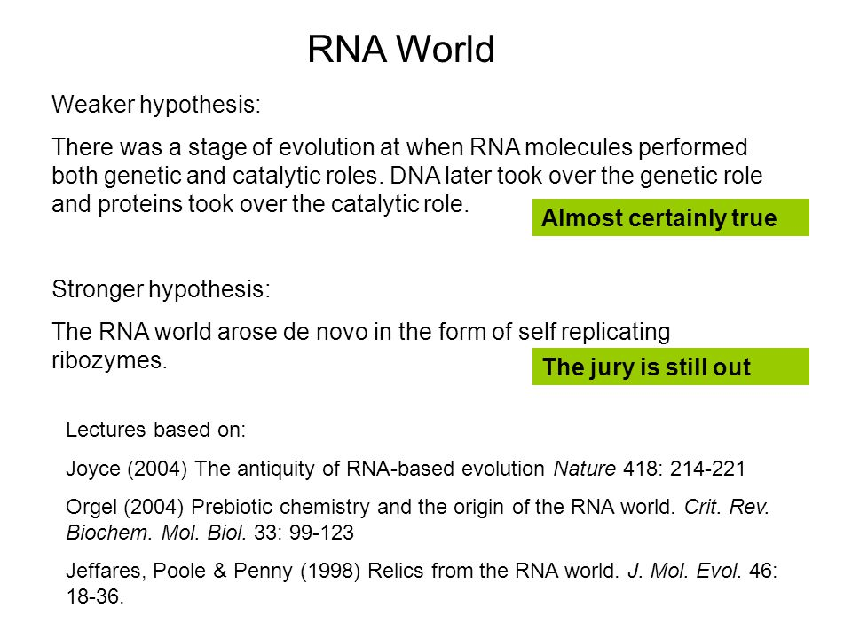 RNA World Weaker hypothesis: There was a stage of evolution at when RNA molecules performed both genetic and catalytic roles.