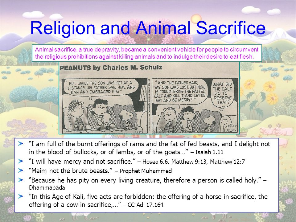 "Religion and Animal Sacrifice ""I am full of the burnt offerings of rams and the fat of fed beasts, and I delight not in the blood of bullocks, or of l"