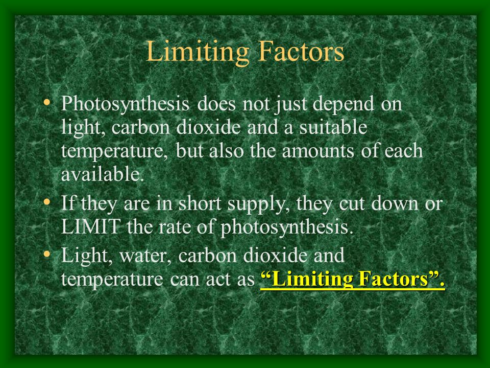 Limiting Factors Photosynthesis does not just depend on light, carbon dioxide and a suitable temperature, but also the amounts of each available.