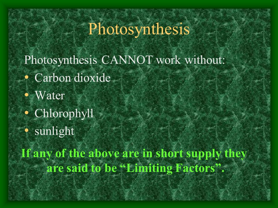 Photosynthesis Photosynthesis CANNOT work without: Carbon dioxide Water Chlorophyll sunlight If any of the above are in short supply they are said to be Limiting Factors .