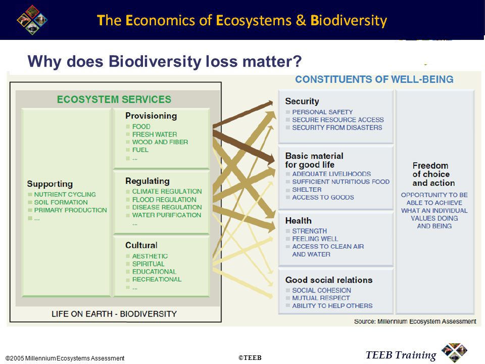 TEEB Training ©2005 Millennium Ecosystems Assessment Why does Biodiversity loss matter ©TEEB
