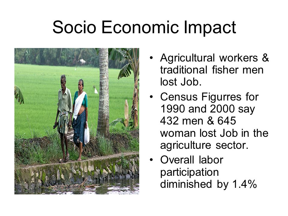 Socio Economic Impact Agricultural workers & traditional fisher men lost Job. Census Figurres for 1990 and 2000 say 432 men & 645 woman lost Job in th