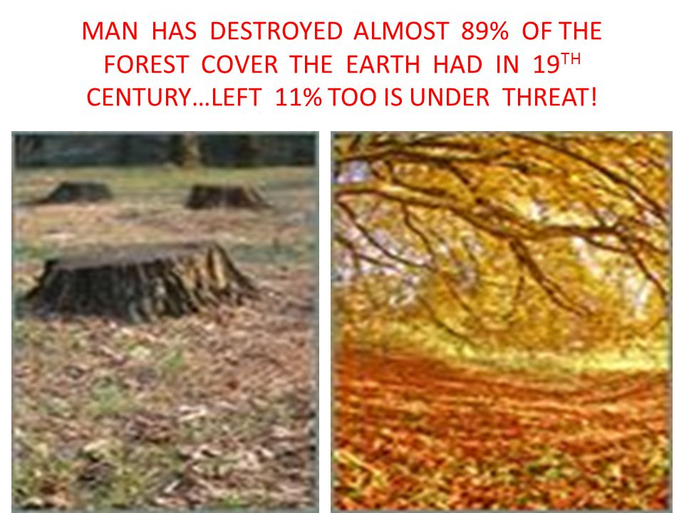 MAN HAS DESTROYED ALMOST 89% OF THE FOREST COVER THE EARTH HAD IN 19 TH CENTURY…LEFT 11% TOO IS UNDER THREAT!