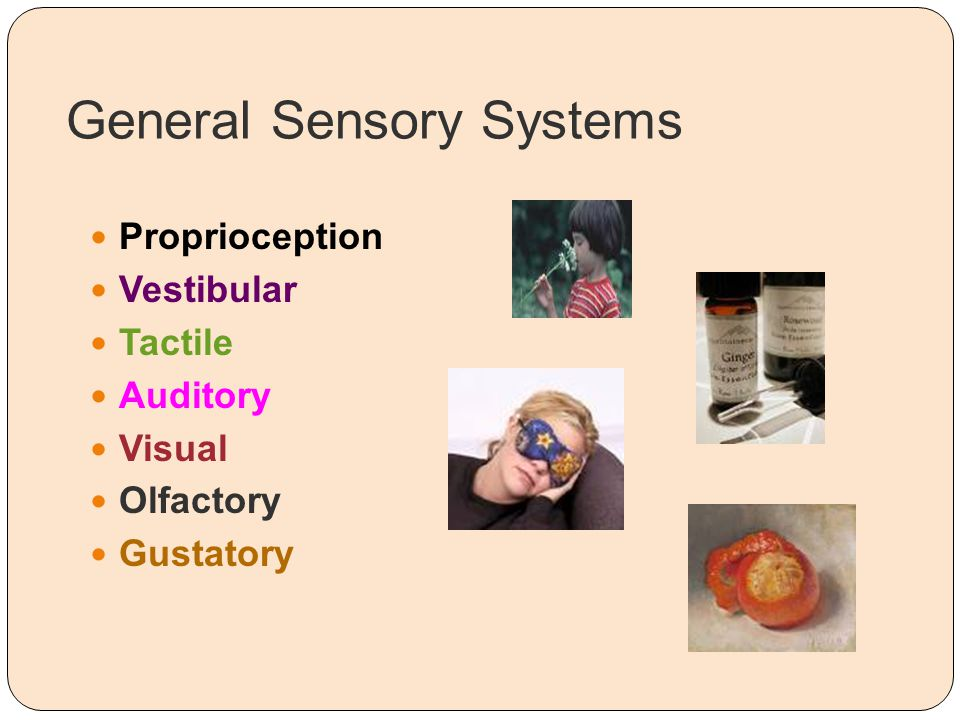 General Sensory Systems Proprioception Vestibular Tactile Auditory Visual Olfactory Gustatory