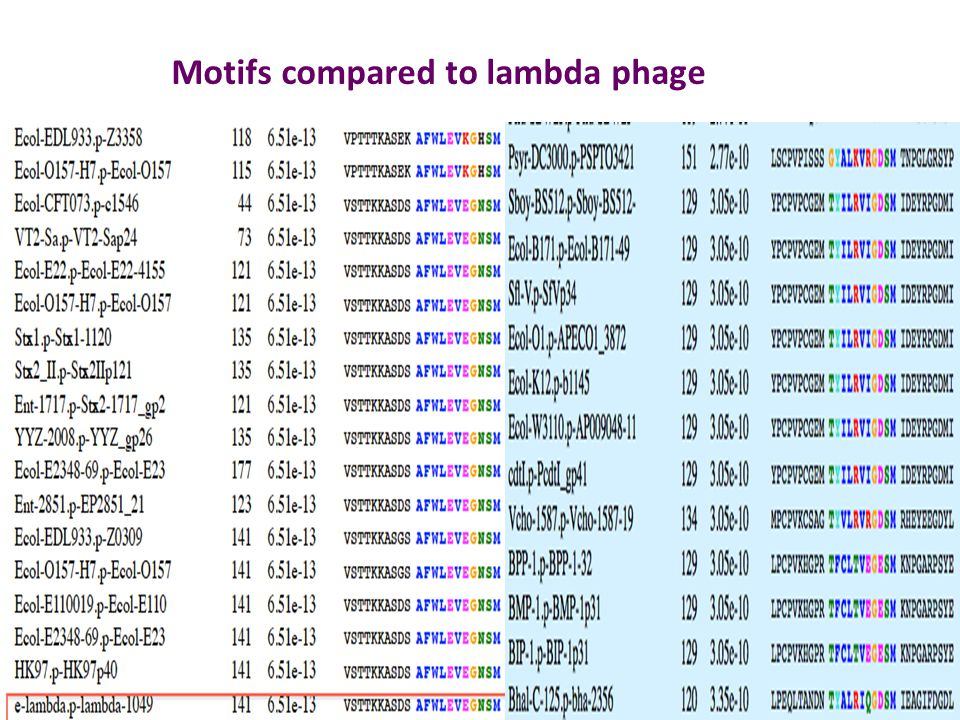 Motifs compared to lambda phage
