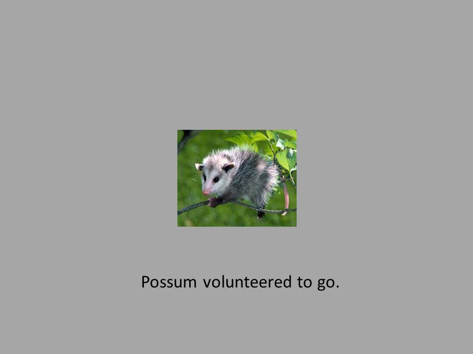 Possum volunteered to go.