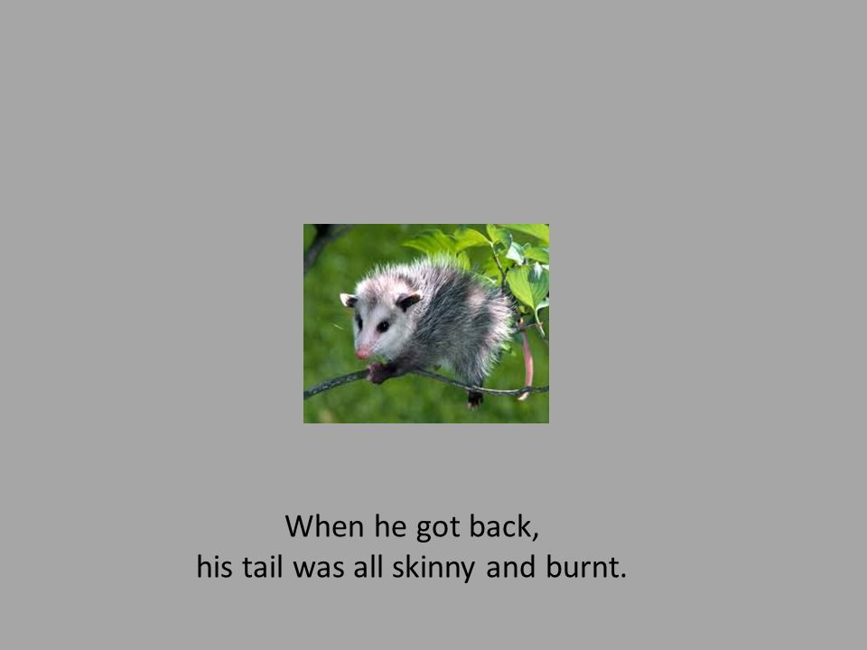When he got back, his tail was all skinny and burnt.