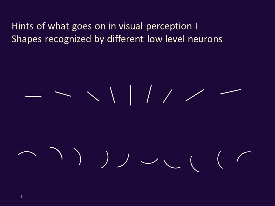 Hints of what goes on in visual perception I Shapes recognized by different low level neurons 10