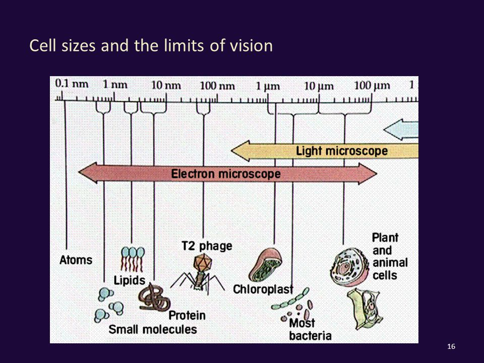 Cell sizes and the limits of vision 16