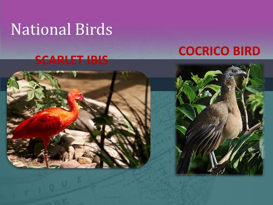 National Birds SCARLET IBIS COCRICO BIRD