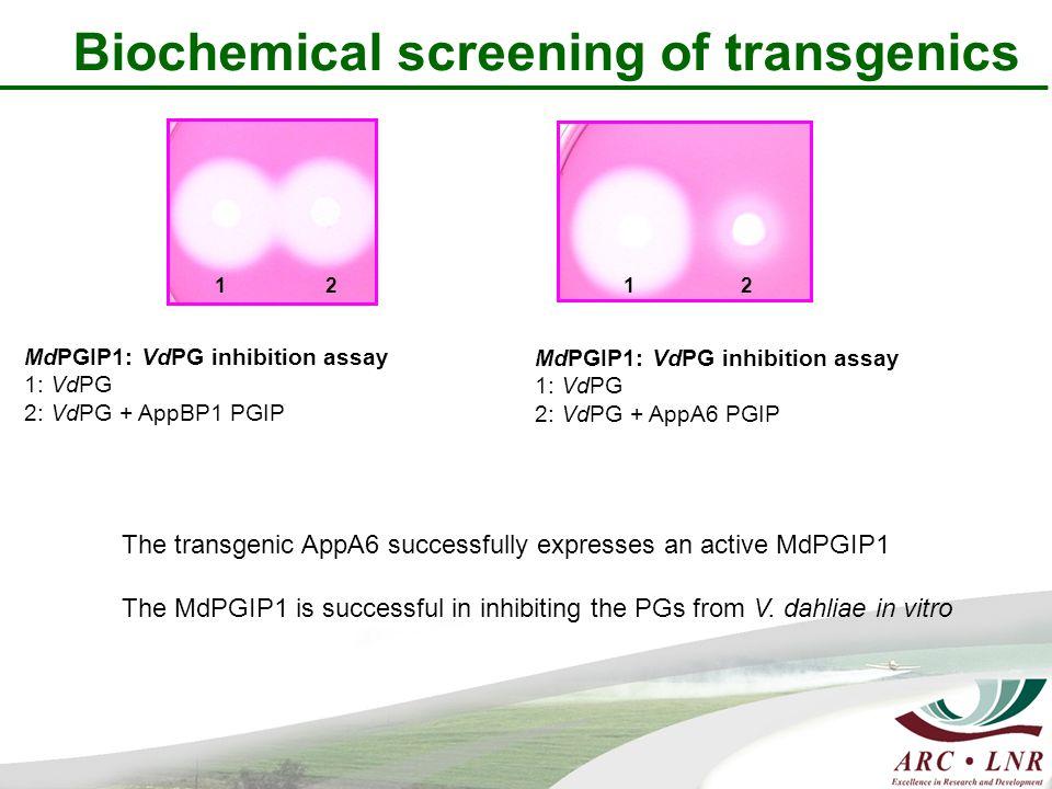 Biochemical screening of transgenics MdPGIP1: VdPG inhibition assay 1: VdPG 2: VdPG + AppA6 PGIP MdPGIP1: VdPG inhibition assay 1: VdPG 2: VdPG + AppBP1 PGIP 1 2 1 2 The transgenic AppA6 successfully expresses an active MdPGIP1 The MdPGIP1 is successful in inhibiting the PGs from V.