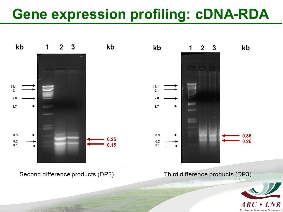 kb 1 2 3 kb 14.1 5.1 2.0 1.7 0.3 0.2 0.1 0.25 0.15 kb 1 2 3 kb 14.1 5.1 2.0 1.7 0.3 0.2 0.1 0.35 0.25 Second difference products (DP2) Third difference products (DP3) Gene expression profiling: cDNA-RDA