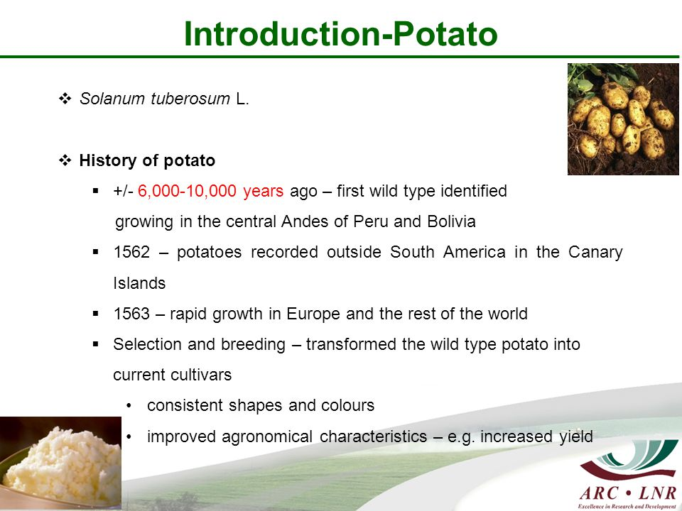 Introduction-Potato  Solanum tuberosum L.