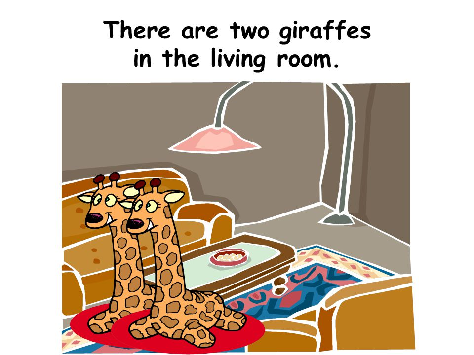 There are two giraffes in the living room.