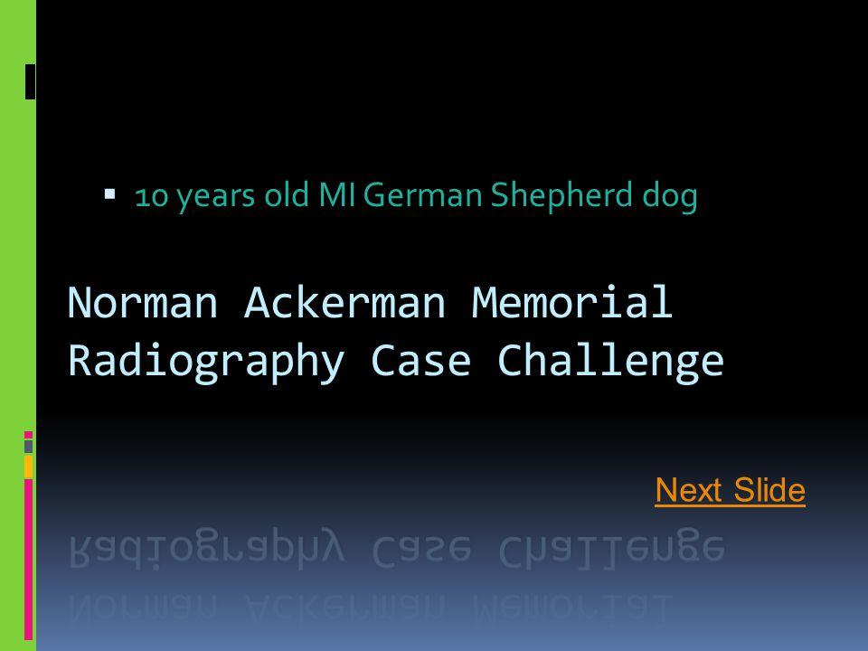  10 years old MI German Shepherd dog Next Slide