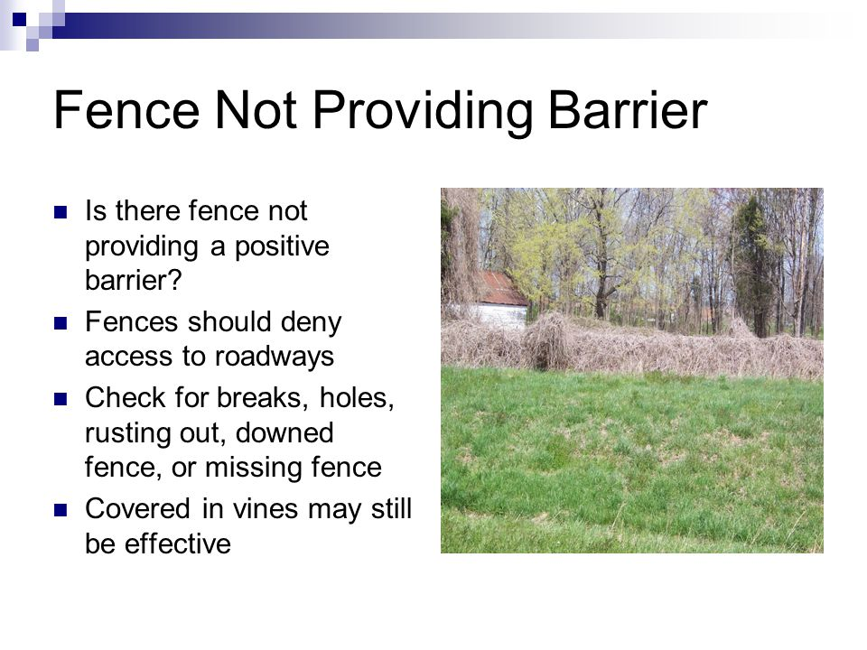 Fence Not Providing Barrier Is there fence not providing a positive barrier.