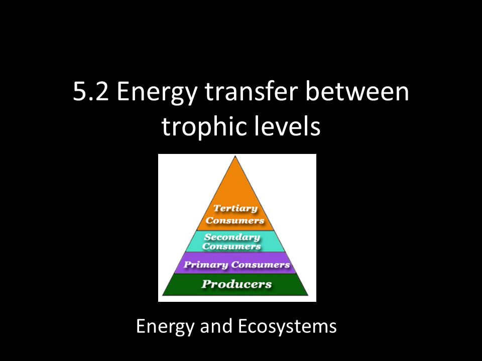 5.2 Energy transfer between trophic levels Energy and Ecosystems