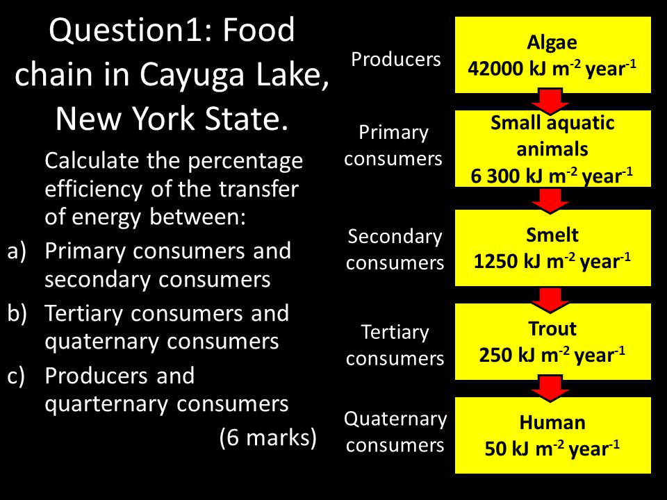 Question1: Food chain in Cayuga Lake, New York State. Calculate the percentage efficiency of the transfer of energy between: a)Primary consumers and s